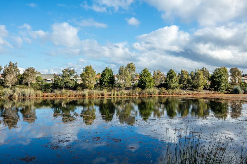 Hibiscus Chancellor Park