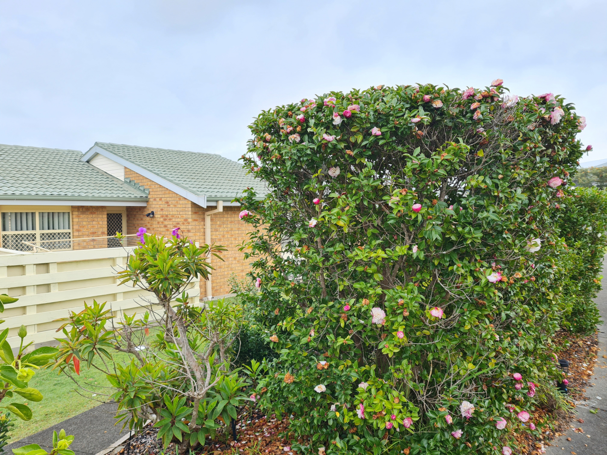 Refurbished 2 Bedroom Villa with Great Views 6 / 120  Redhead Road - Redhead 2290 Retirement Property for Sale