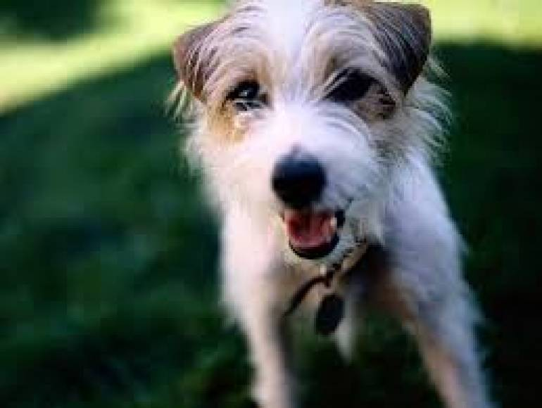 Looking for a pet-friendly property? - Downsizing