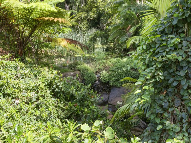 Stunning rainforest vista - Inspection is a must!