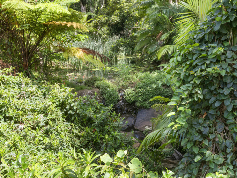 Stunning rainforest outlook - Inspection a must!
